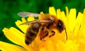 abeilles_0.jpg