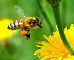 abeilles-copie-1.jpg