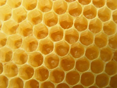 abeille oeufs.jpg