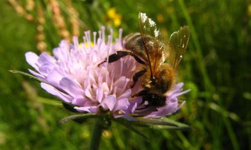 Visuel-une-2-abeilles-polinisation-miel-biodiversite.jpg